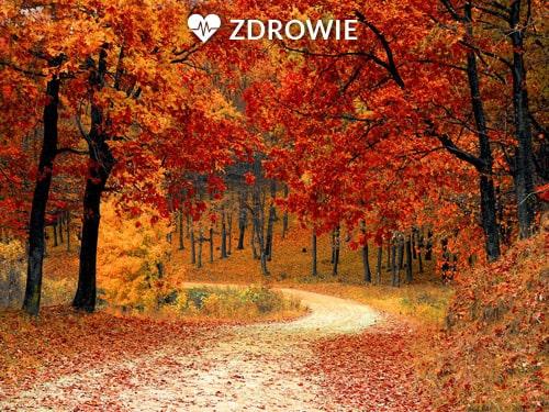 Jesienny_blues_czyli_jak_nie_przeistoczyc_sie_w_niedzwiedzia_w_stanie_hibernacji