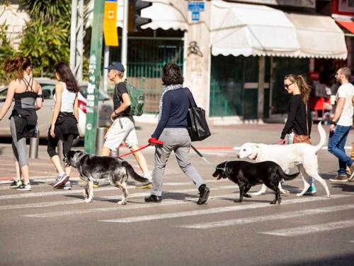 adopcja-psow-nowy-york-1