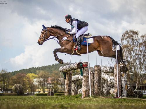 konie-1