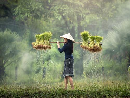 darmowy-ryz-2
