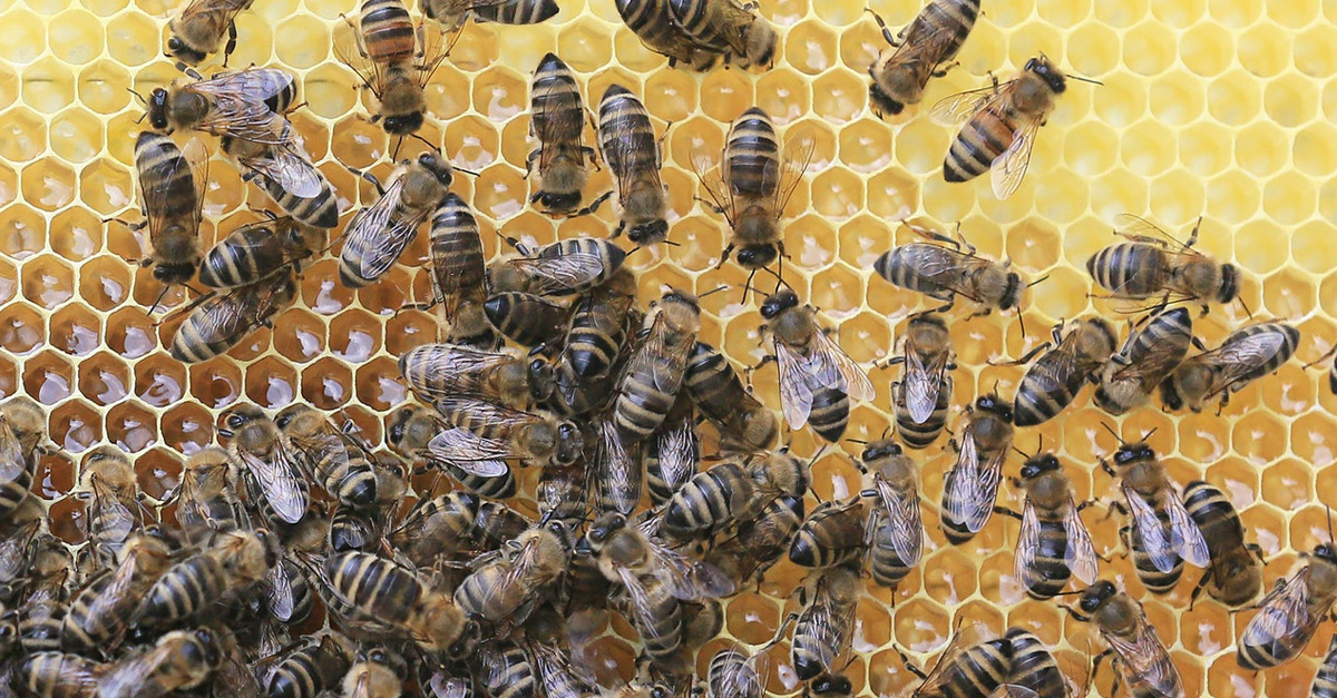bojowe-pszczoly-1