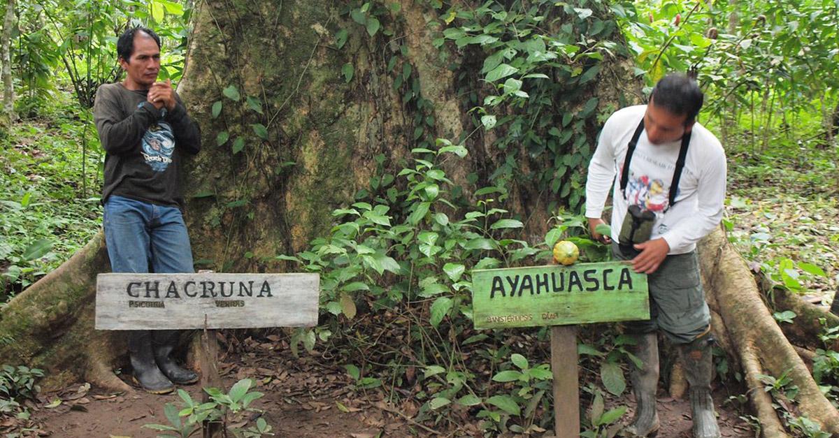 ayahuasca-2
