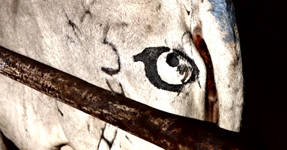 malowanie-oczu-bydlo-2