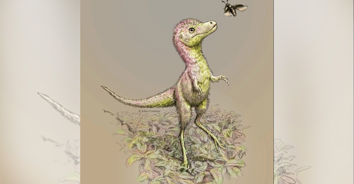 Dinozaury-1